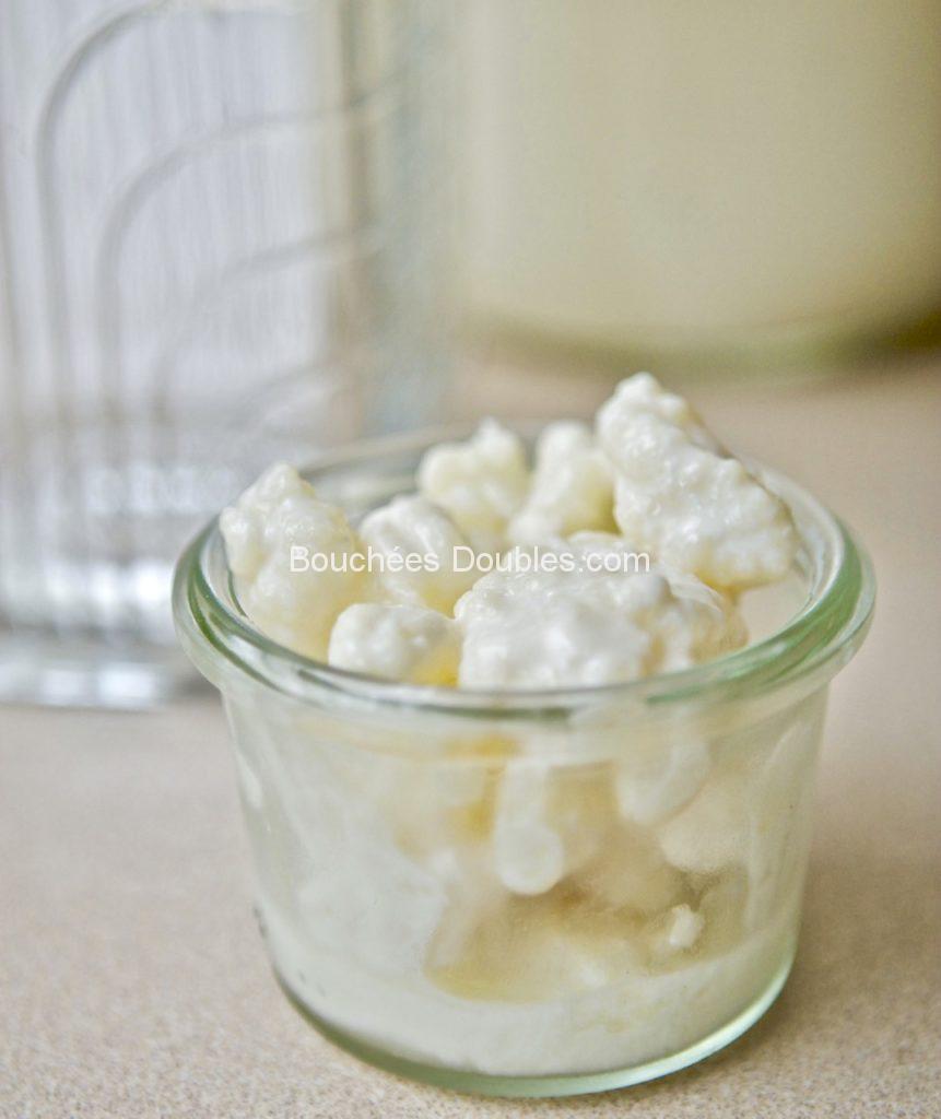Cliquez ici pour tout savoir sur le Kéfir de lait et comment en faire chez vous très facilement